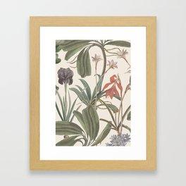 Botanical Stravaganza (variant). Framed Art Print