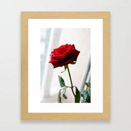 Rose of Valentine's day Framed Art Print