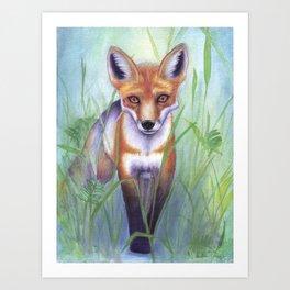 Young Fox Art Print