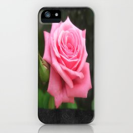 Pink Roses in Anzures 4 Blank P4F0 iPhone Case