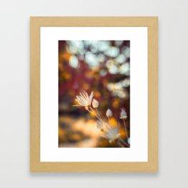 A Little Glow wildflowers in the Fall Framed Art Print