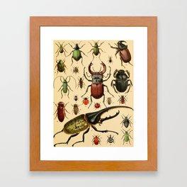 Popular History of Animals Beetles Vintage Scientific Illustration Educational Diagrams Framed Art Print