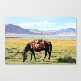 Tso Kar Horse Canvas Print