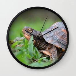 Box Turtle in the Garden Wall Clock