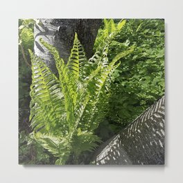 Ferns - the leaves and the shadows - against birch bark Metal Print