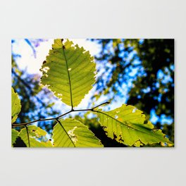 End of Summer Leaves Canvas Print