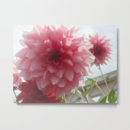 Pretty Pink Dahlia Ruffles Metal Print