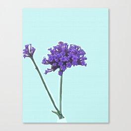 Verbena Canvas Print