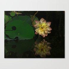 Lotus Bloom Canvas Print