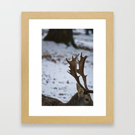 The Stag Framed Art Print