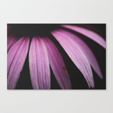 Lavender  Bloom Canvas Print
