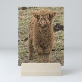 Scottish Highland baby cow Mini Art Print