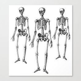 Three Skeletons Canvas Print