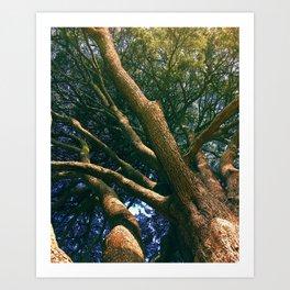 Tree at Malahide Art Print