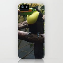 National Aviary - Pittsburgh - Keel Billed Toucan 1 iPhone Case