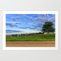 Cow Blues Art Print