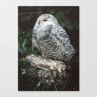 hedwig Canvas Prints featuring hedwig by Leanne Taylor Collection