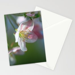 Apple Tree Blossoms In Spring Stationery Cards