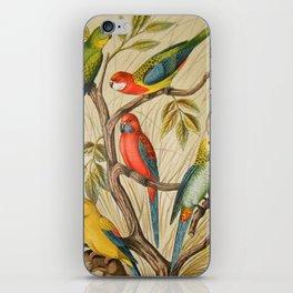 Vintage parrots iPhone Skin