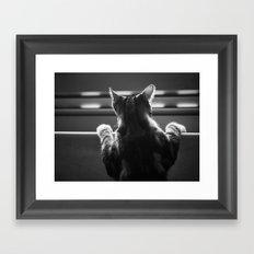 Cat II Framed Art Print