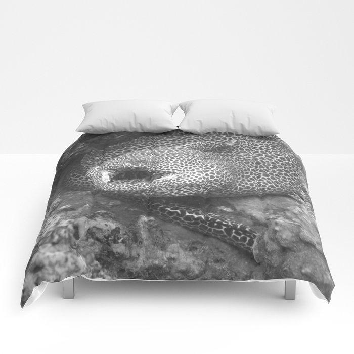 Coiled fat eel Comforters