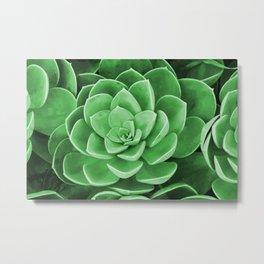 Succulent Blossom green color Metal Print