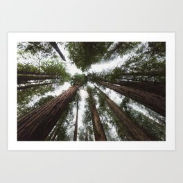 Redwood Portal - nature photography Art Print