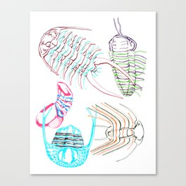 Ordovician Era Trilobites Canvas Print