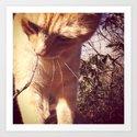 curious cat by faithrivers
