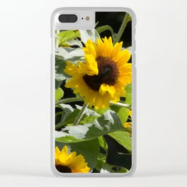 Have you hugged a sunflower today Clear iPhone Case