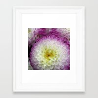 dahlia Framed Art Prints featuring dahlia by blackpool