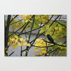 Raven Photography, a yellow coloured tree in Seattle caught my eye Canvas Print