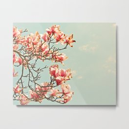 Pink Magnolia Blossoms in Spring Metal Print
