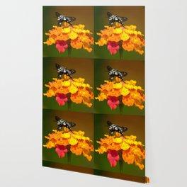Black bee feeding on yellow flowers Wallpaper