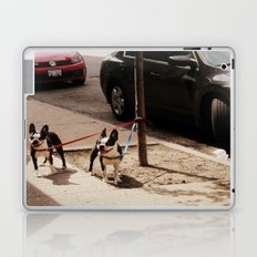 Boston Terriers ~ amped up for action! Laptop & iPad Skin