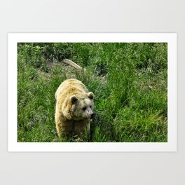 Rexburg Idaho - Bear Watch Art Print