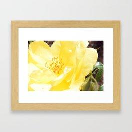 Lemon Pop Framed Art Print