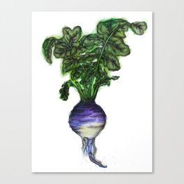 Rooted: The Rutabaga Canvas Print