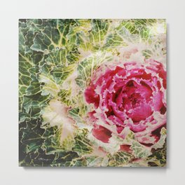 Cabbage Foliage Metal Print