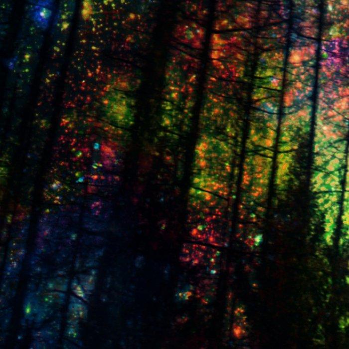 Magical Forest II Leggings