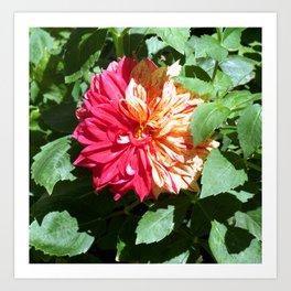 Flower of Brera Art Print