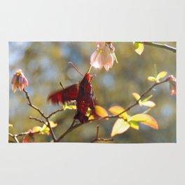 Hummingbird Moth feed on blueberry bloom nectar Rug