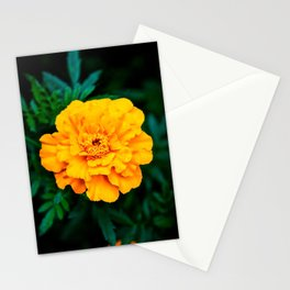 Tangerine Beauty Stationery Cards