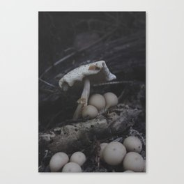 The Mushroom King Canvas Print