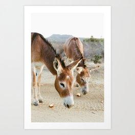 Two Donkeys Eating Apples Art Print