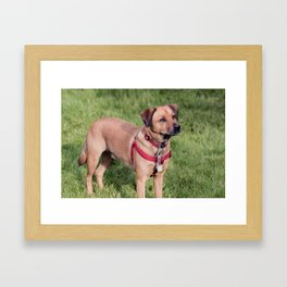 Rover Framed Art Print