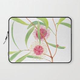 Pincushion Hakea (Hakea Laurina) watercolour; Australian flower Laptop Sleeve