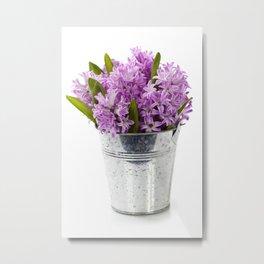 Beautiful Hyacinths in vase over white Metal Print
