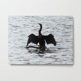 Anhinga bird drying its wings Metal Print