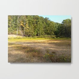 Photo USA Indiana State Park Nature Parks forest G Metal Print